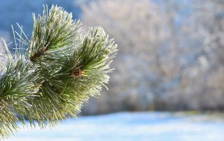 Bildquelle: https://www.freepik.com/free-photo/frost-and-snow-on-branches-beautiful-winter-seasonal-background-photo-of-frozen-nature_2925216.htm#term=montypeter%20winter&page=1&position=6