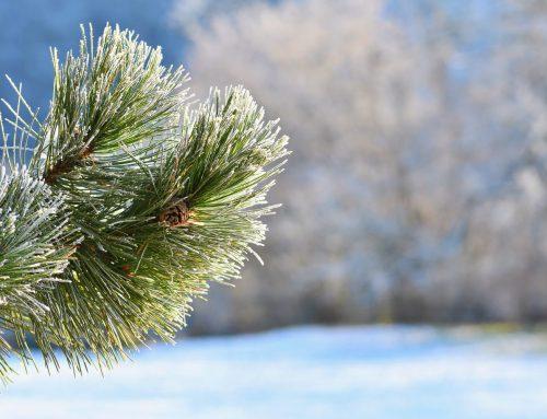 Weihnachtliches Jahresende mit Musikzug und Jugendmusikzug